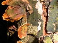 Fungi, Khao Yai National Park