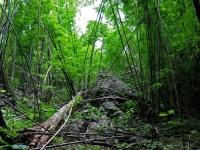 Bamboo forest in Sai Yok National Park, Kanchanaburi