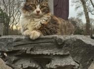 Feline goddess