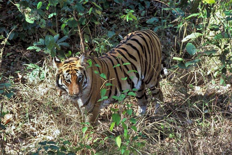 Female at Kisli