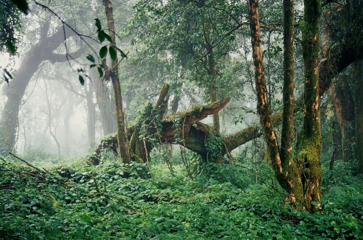 forest on Doi Inthanon