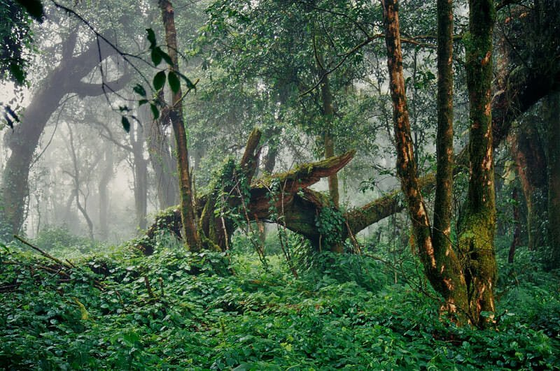 Cloud forest of Doi Inthanon National Park
