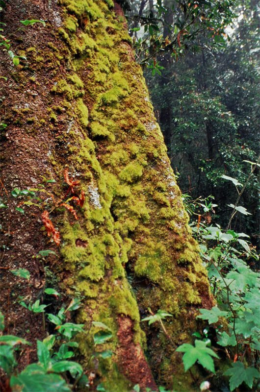 Moss-covered tree trunk
