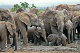 Addo Elephant Park: Elephants
