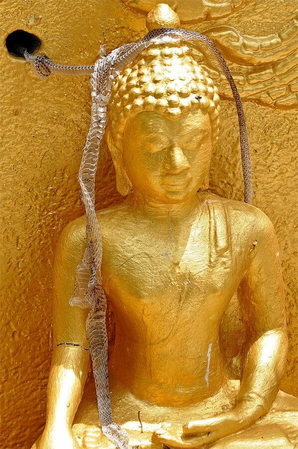 Buddhist monk adorned with shed snake's skin