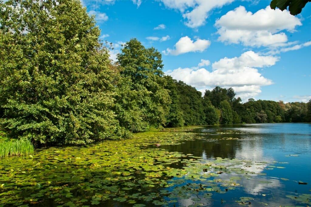 Birds of Moscow - Kuzminsky pond