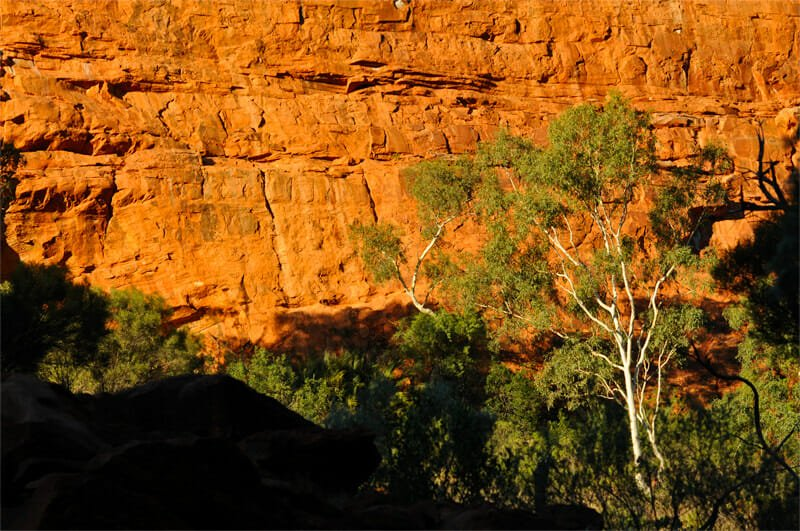 Wildlife of Uluru and the Kings Canyon