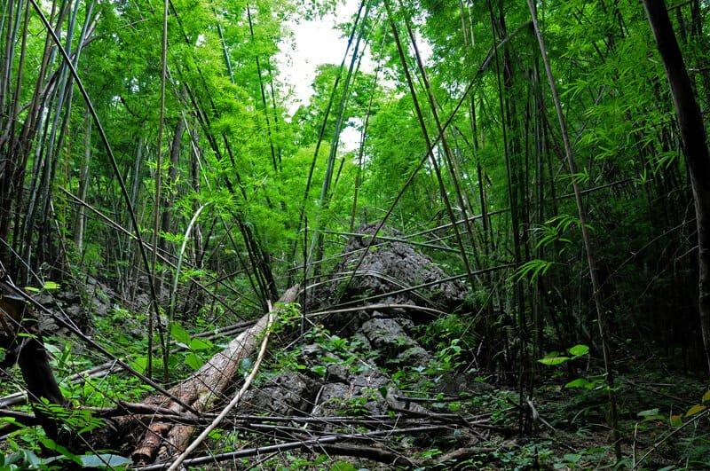 Western Forest Complex - Sai Yok Yai