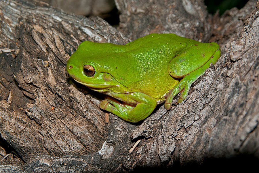Hidden in plain sight – Frogs and other wildlife of the Watagan Mountains