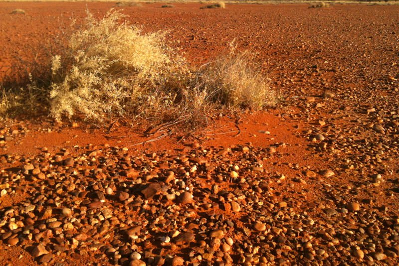Gibber plain in the Simpson desert