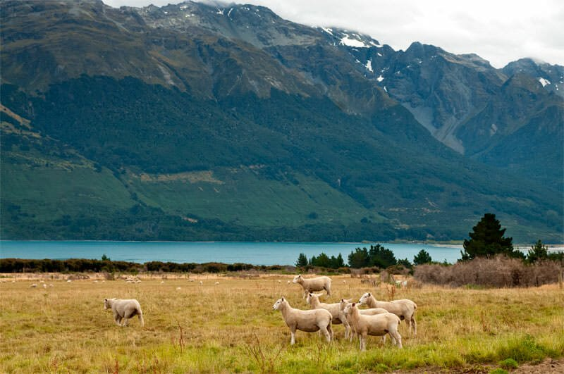 Typical New Zealand scene