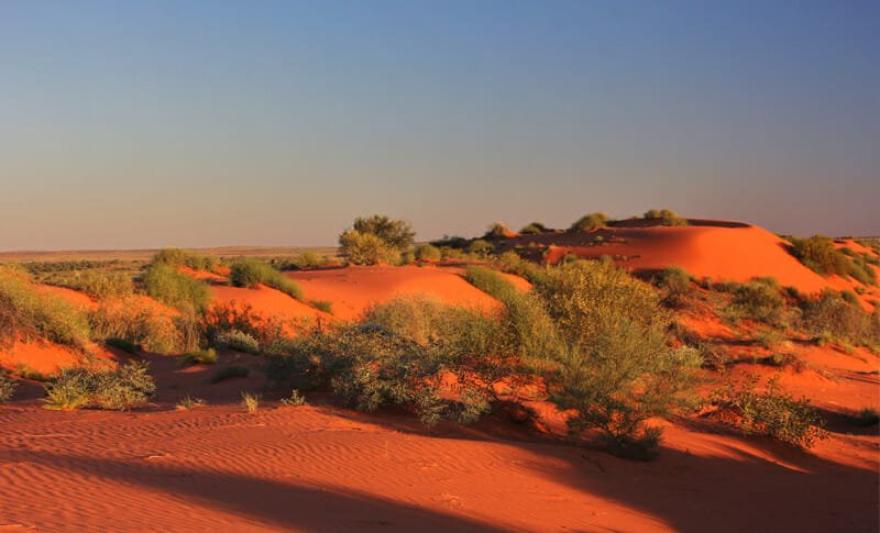 Red sand dune in the simpson desert