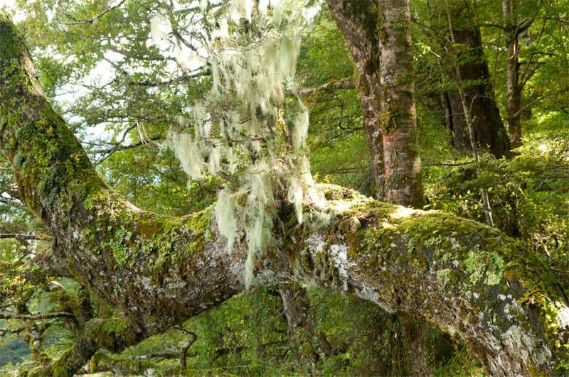 Te Anau to Milford Sound - Rainforest at Mirror lakes