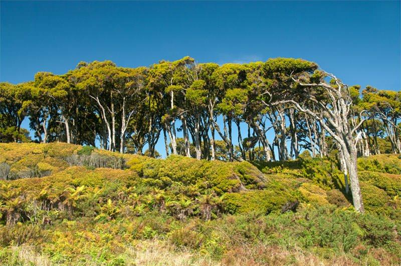 Unusual trees outside of Haast
