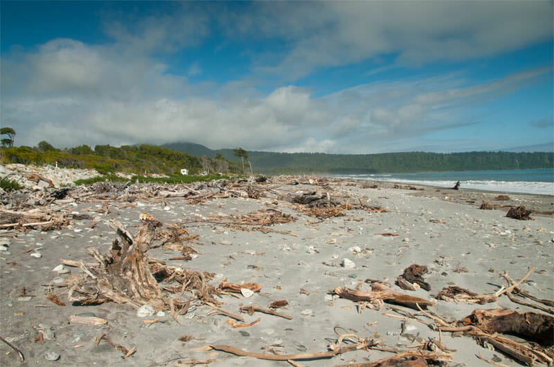 Queenstown to Fox Glacier - Driftwood on the beach