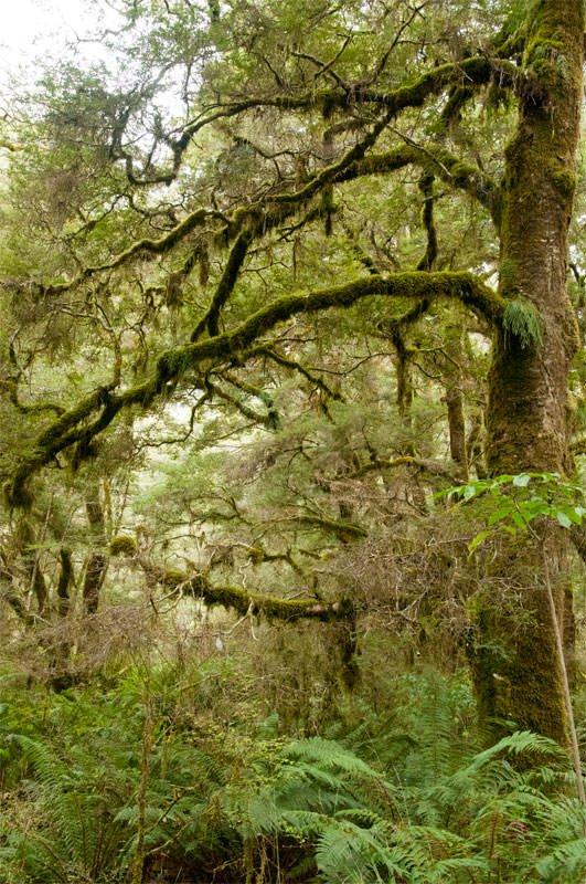 Rainforest at Pleasant Flat