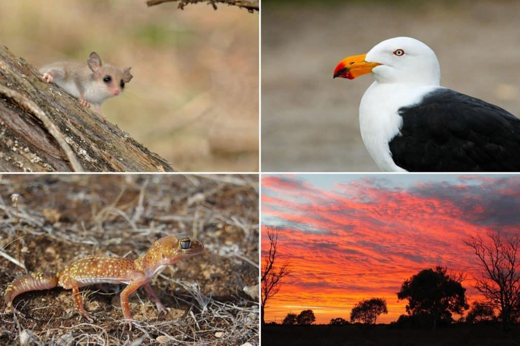 Wildlife of Eyre Peninsula