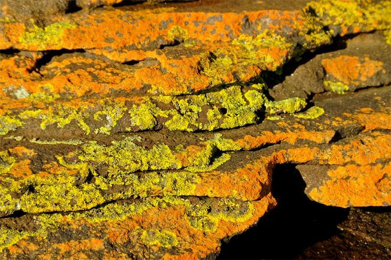 Manly to Spit Bridge walk - Multi-colored algae