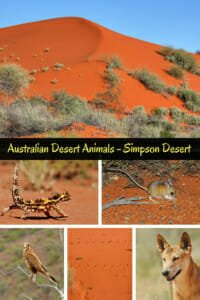 Australian desert animals