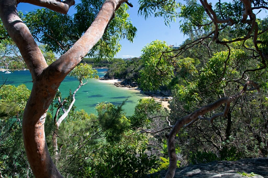 View of Castle Rock Beach from the trail on Manly to Spit Walk