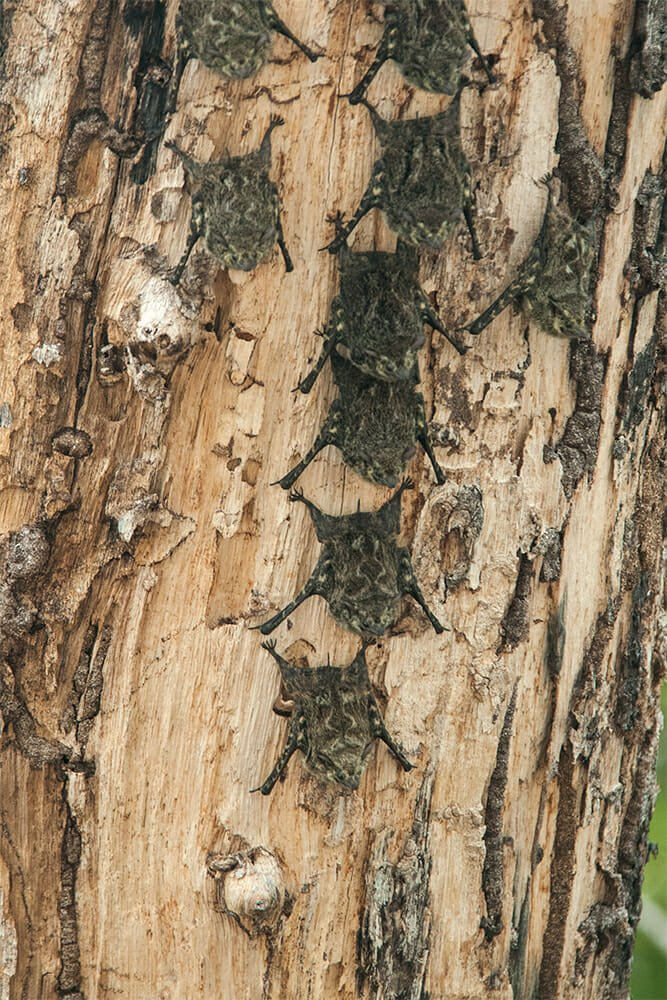 River cruise in Palo Verde - Brazilian long-nosed bats
