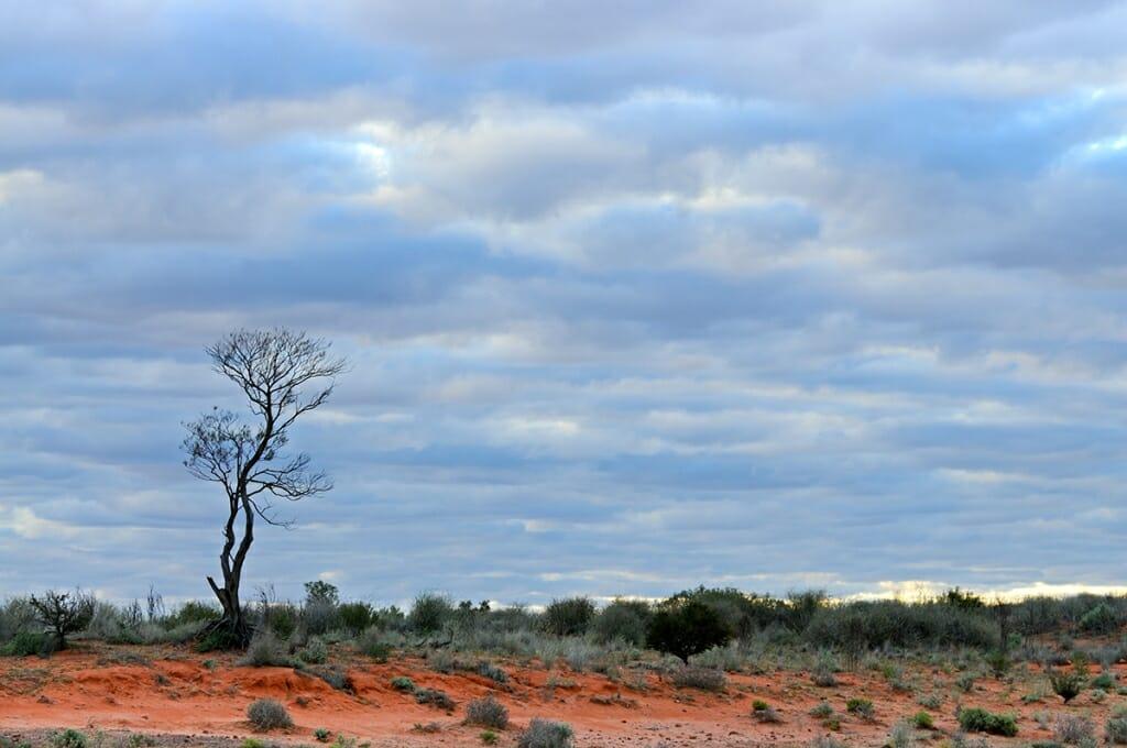 Rain in the Simpson desert
