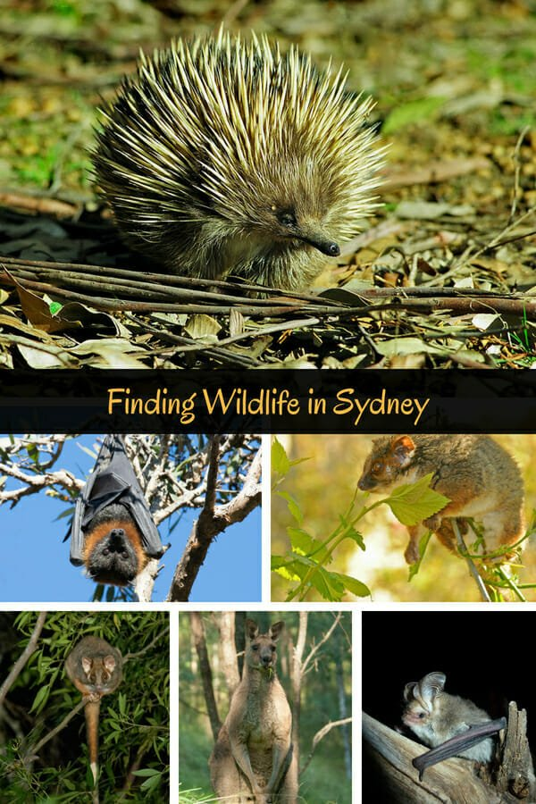 Sydney animals - where to see native wildlife in Sydney