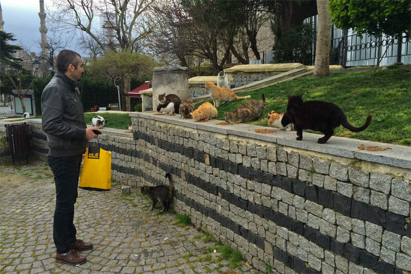 Istanbul resident feeding street cats on the ruins of a Byzantine temple