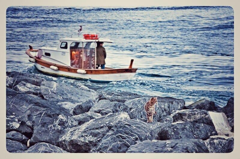 Coastal guard