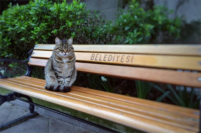 Devout kitty