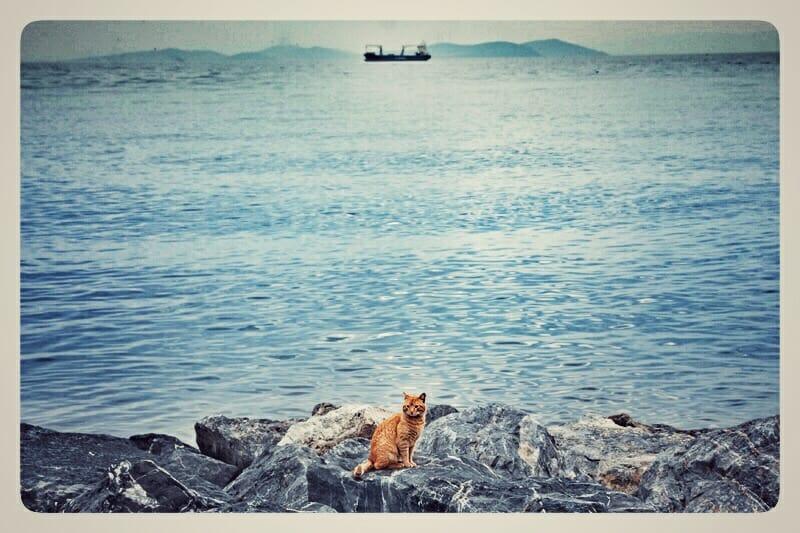 Coastal kitty