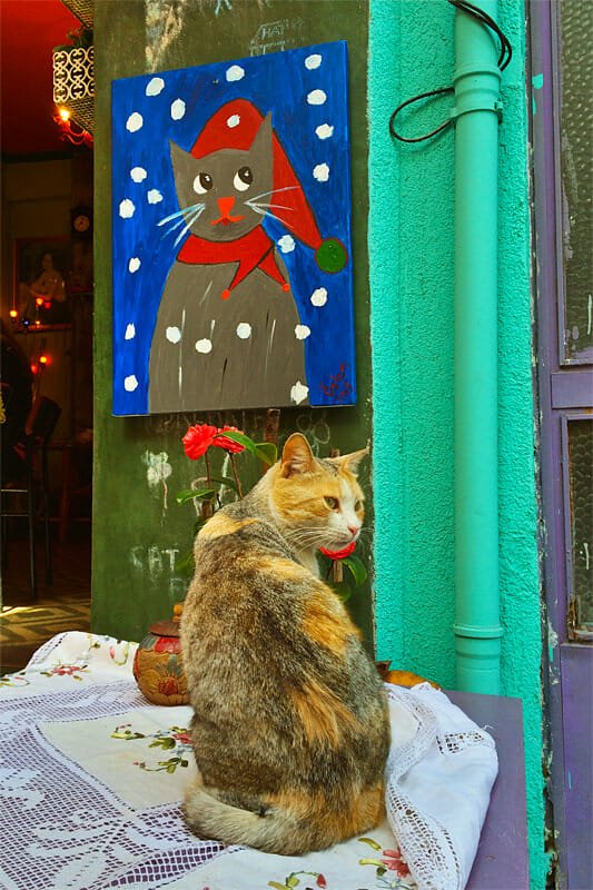 Every cafe is a cat cafe in Istanbul
