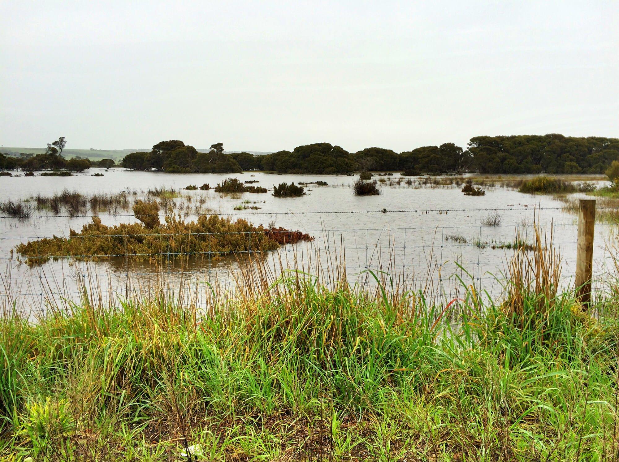 Flooded paddocks