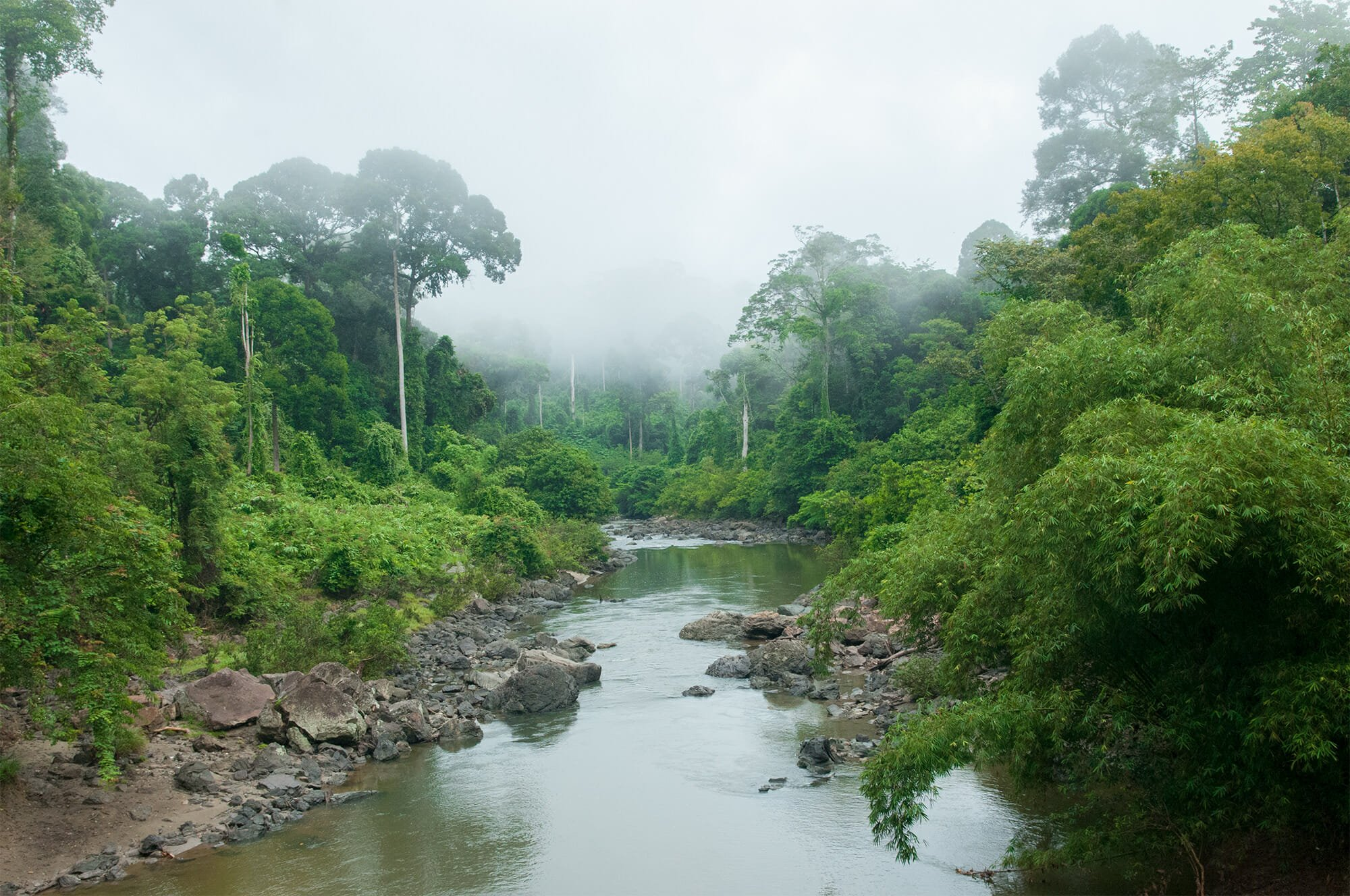 Ancient rainforest of Danum Valley, Borneo