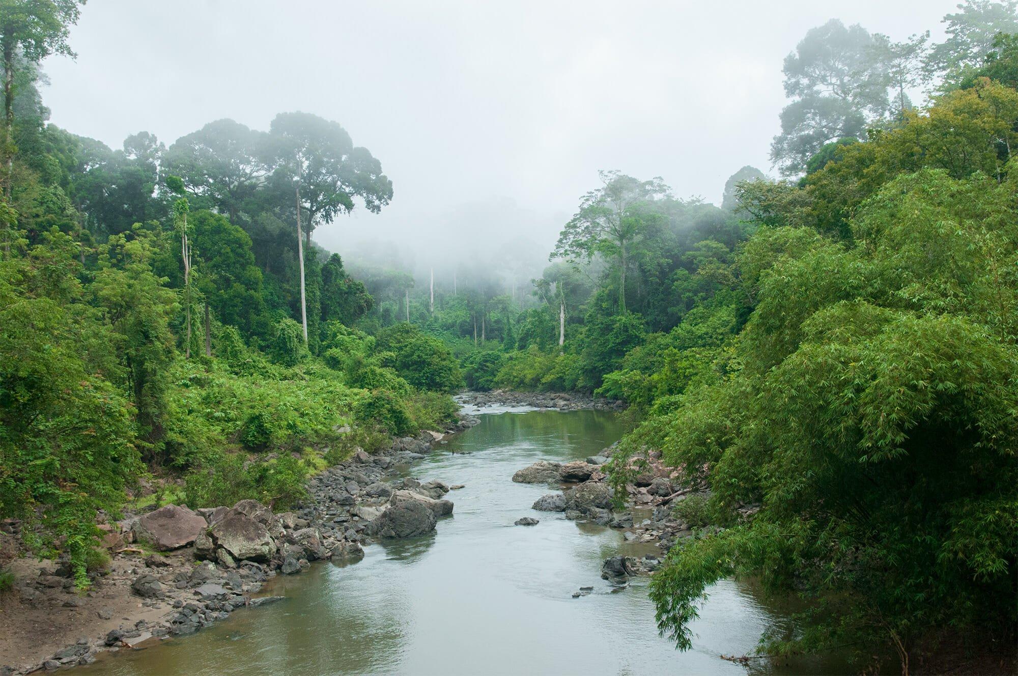 Ancient rainforest of Danum Valley, Borneo