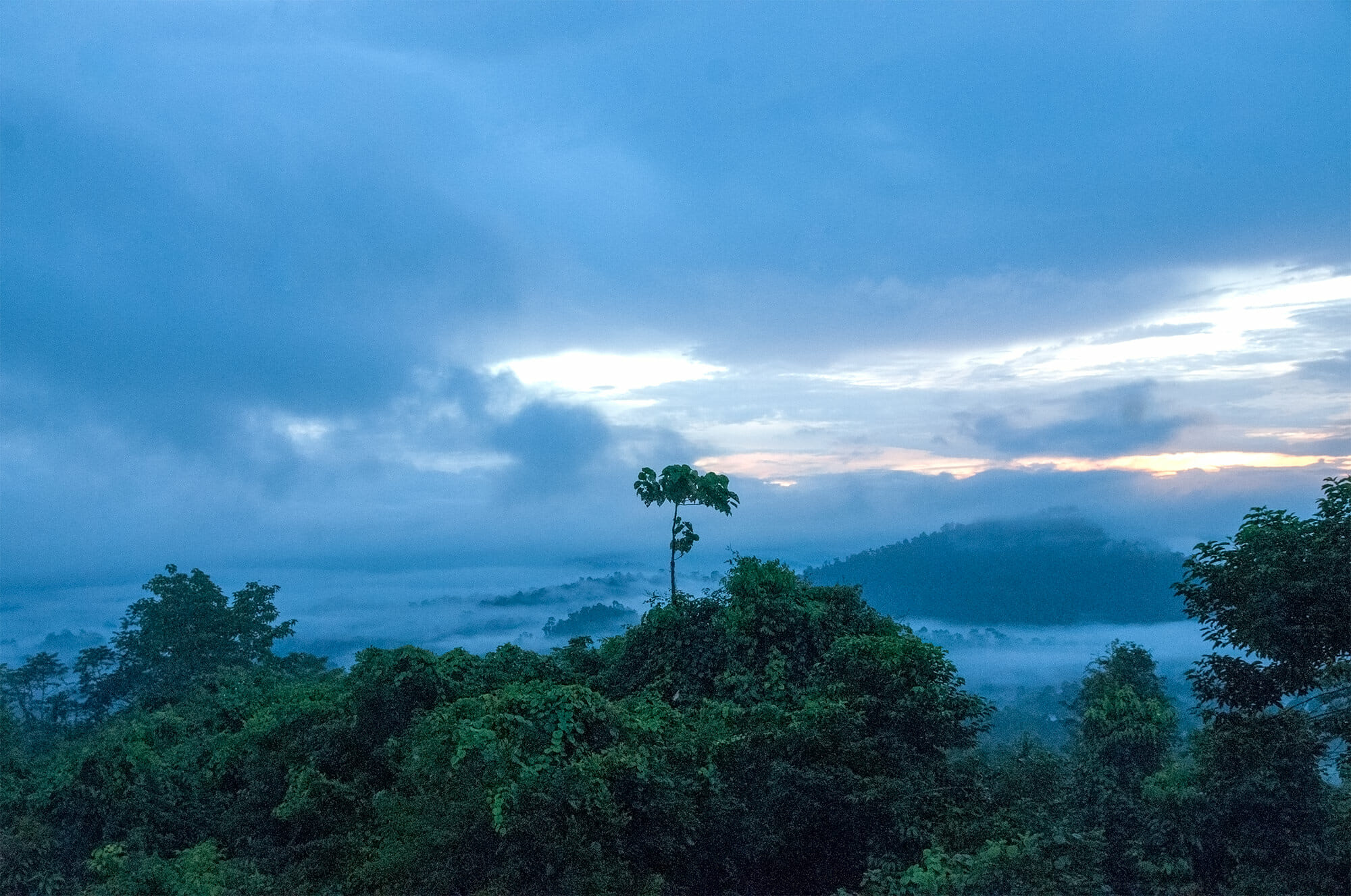 Cloudy sunrise at Danum Valley, Borneo