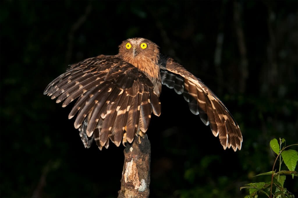 wildlife watching in borneo