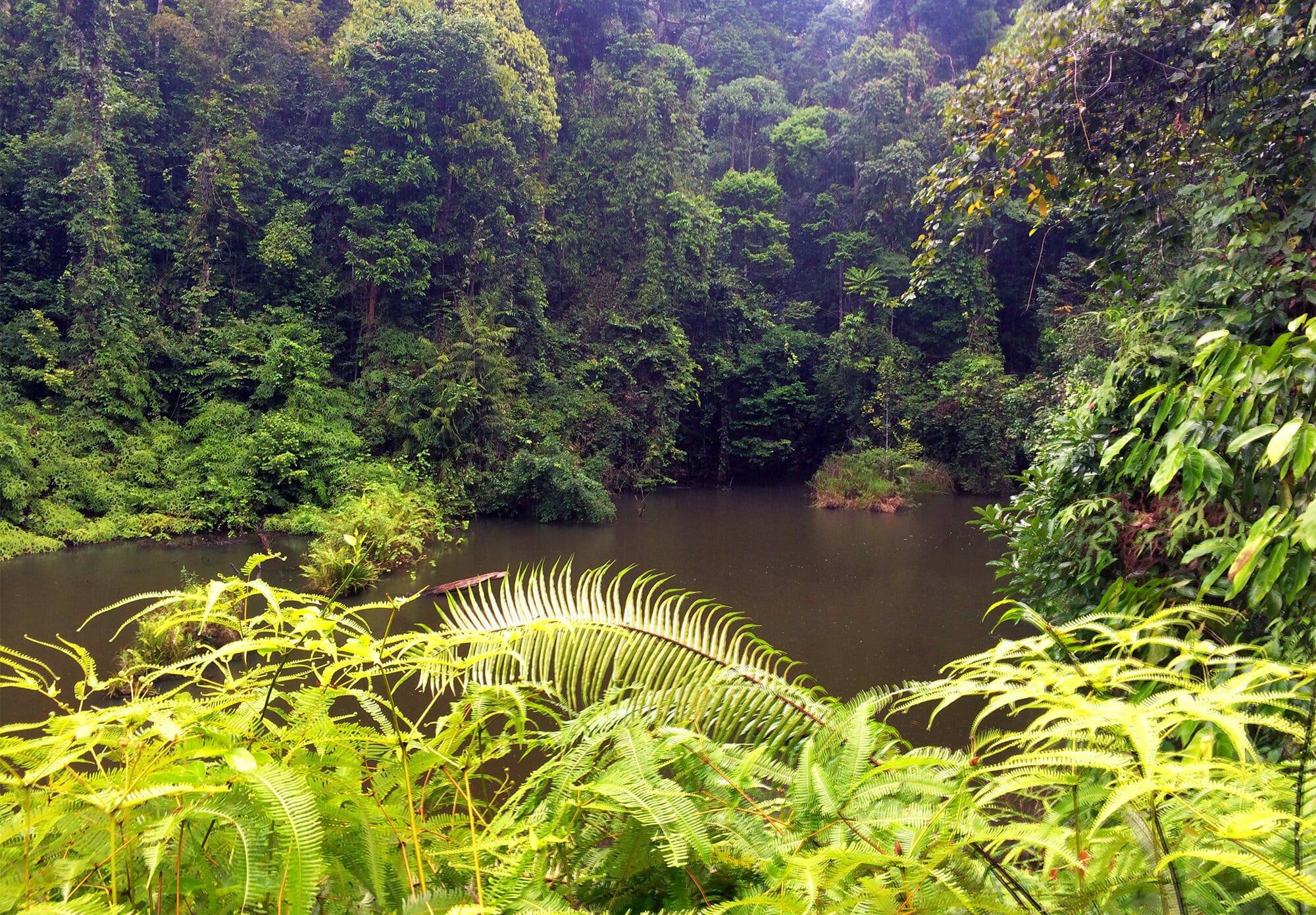 Deramakot Forest Reserve