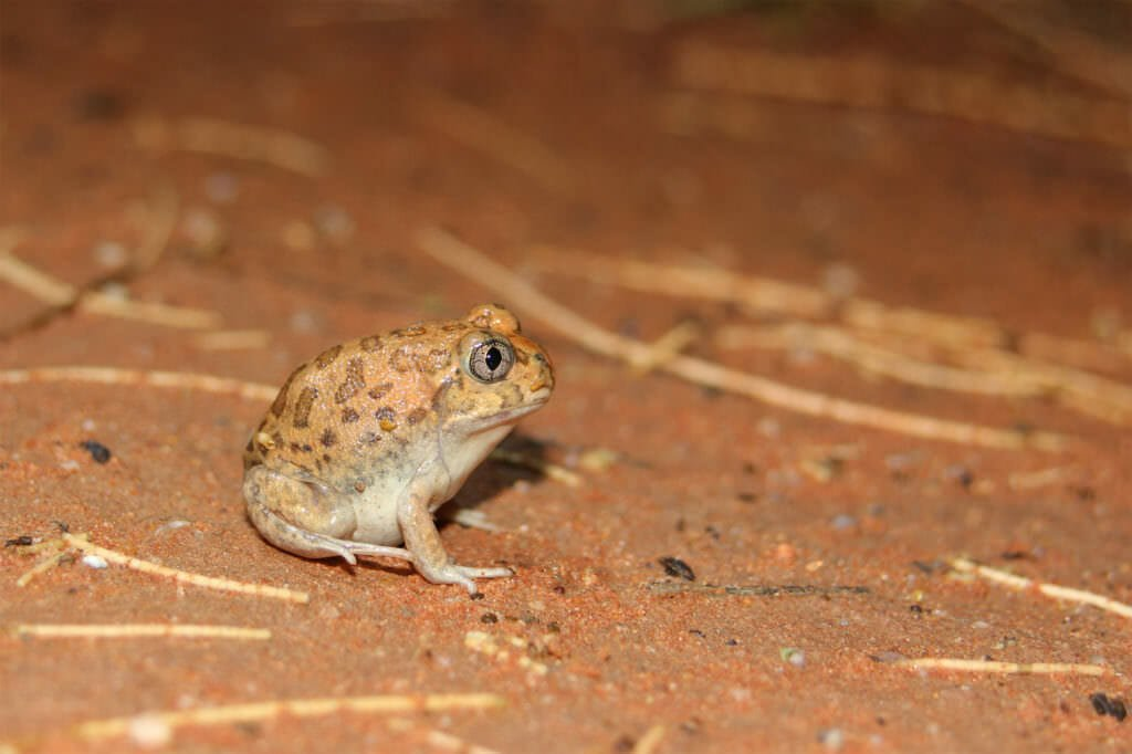frog old andado