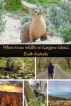 Where to see wildlife on Kangaroo Island, Australia