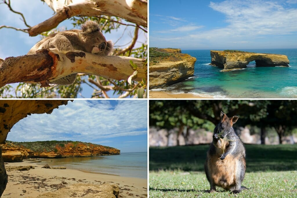 Wildlife of great ocean road