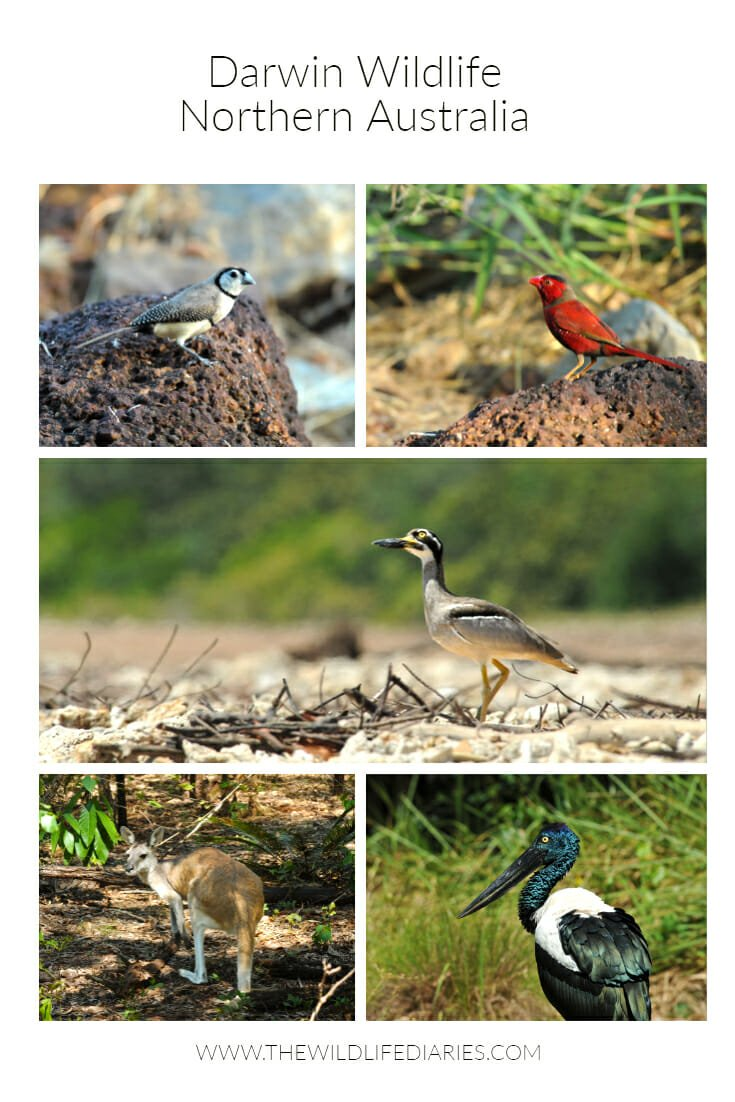 Darwin wildlife #DarwinBotanicGardens #TerritoryPark #LeePoint
