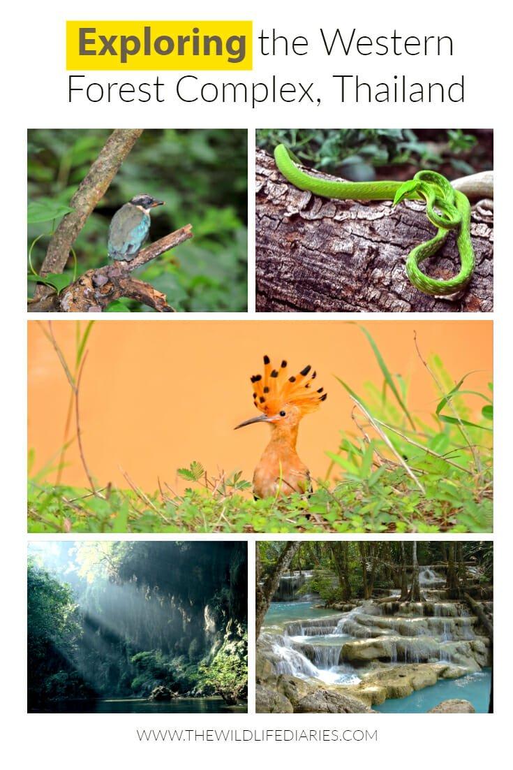 Exploring Western Forest Complex in Thailand #ErawanNationalPark #SaiYokYai #SriNakarin #HuayMaeNaKamin #PhuToe #Umphang #ThailandWildlife #WildlifeTravel