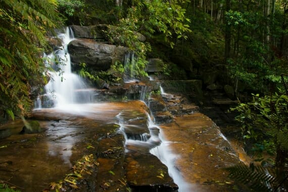 Forest creek in the Valley of the Waters