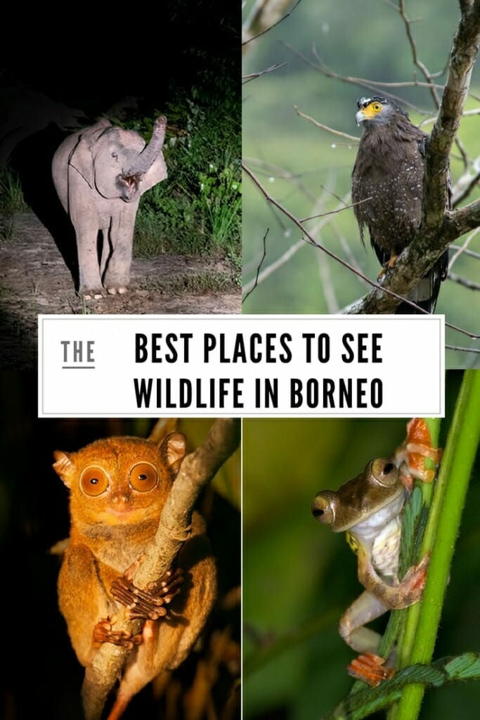 Best places to see wildlife in Borneo