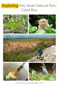 A guide to exploring Palo Verde National Park