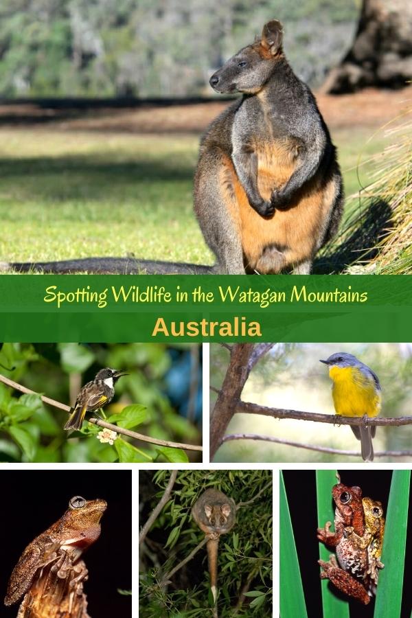 Spotting wildlife in the Watagan Mountains Australia
