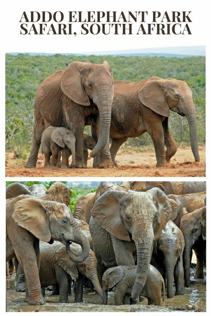 Addo Elephant National Park self drive safari #elephants #addopark #africanwildlife #wildlifetravel
