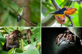 Wildlife of Monteverded Cloud Forest Reserve, Costa Rica