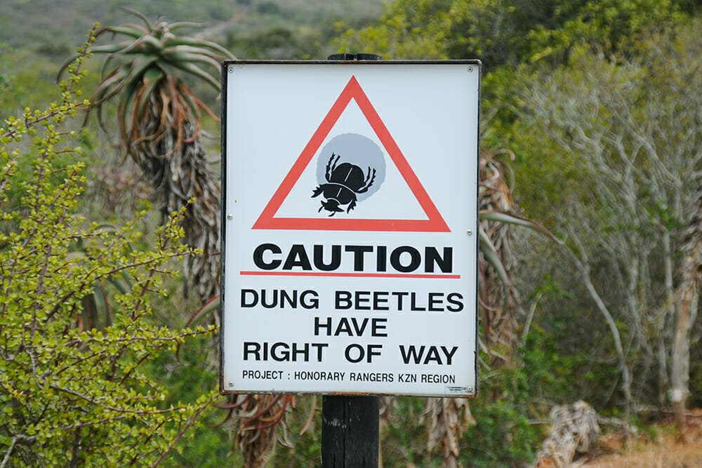 dung beetle right of way sign